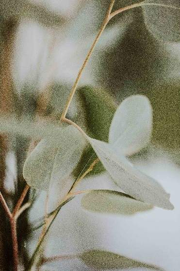 Plantes Gastrofluryl